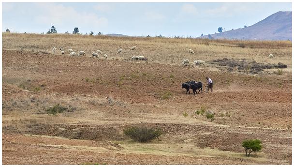 Boliivia põllumees