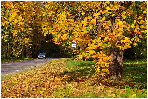 Läbi sügise / Through the autumn