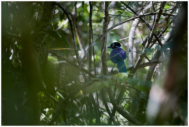 Kübar-sininäär