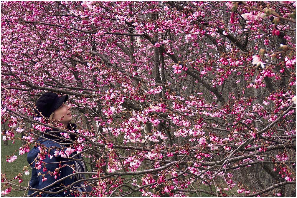 Türi kirsiallee
