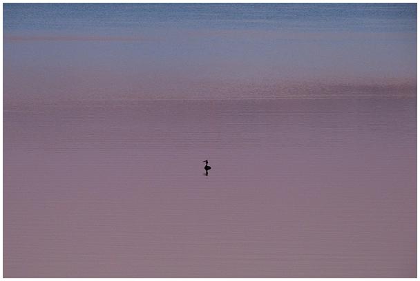 Tuttpütt Tamula järvel