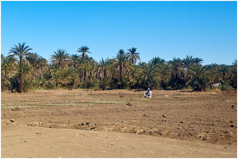 Põllumees Sudaanis