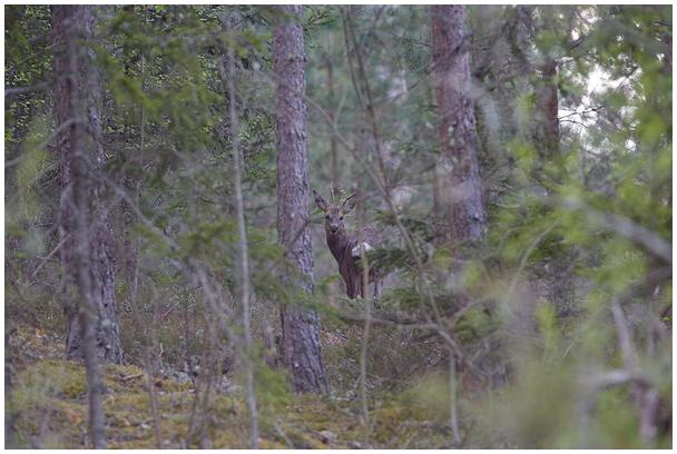 Kohtumine metsas
