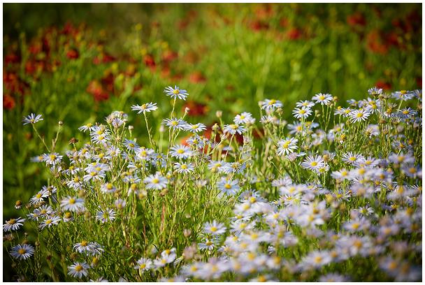 Räpina Aianduskooli aed