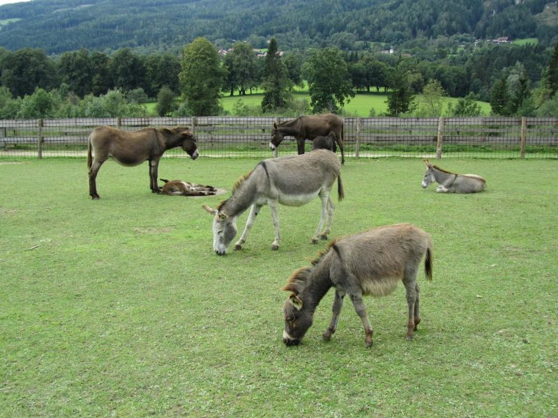 and even more donkeys