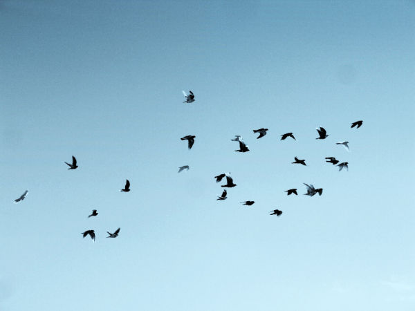 bird stories ...