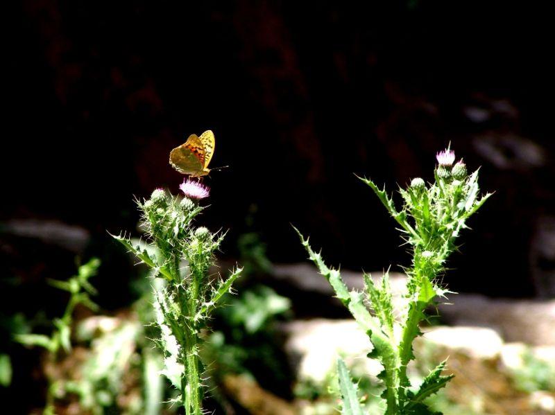butterfliess stories 2 ...