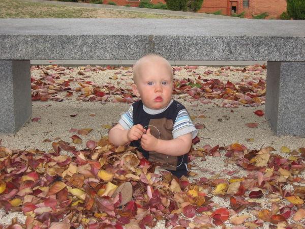 Flynn in Autumn