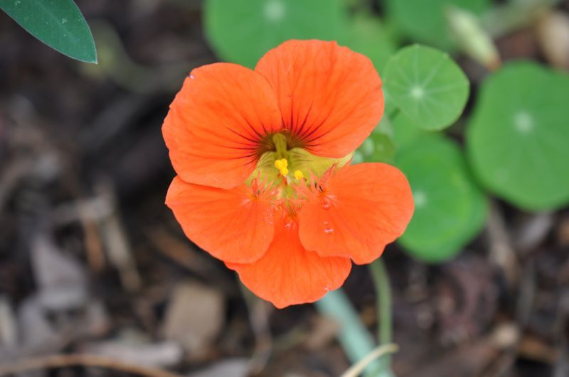 Bendigo Flower #7