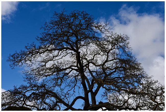 Kyneton Tree
