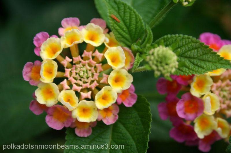 Unique Tropical Flowers Plant Nature Photos The