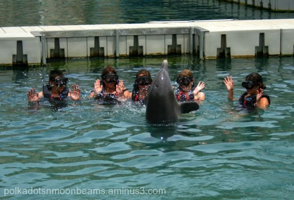 dolphin people animal water bermuda island summer