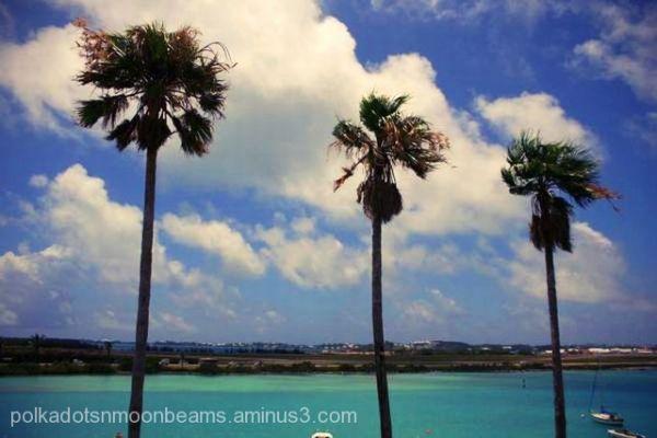 palm trees bay turquoise water bermuda island summ