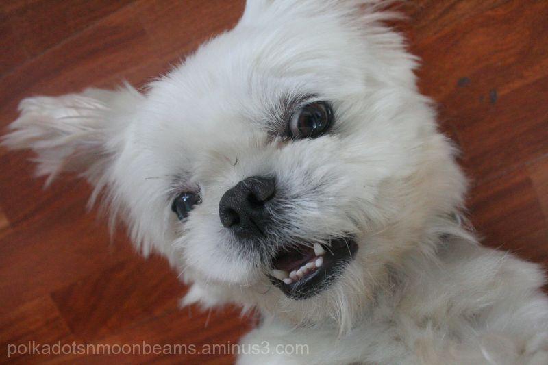 dog smile cute