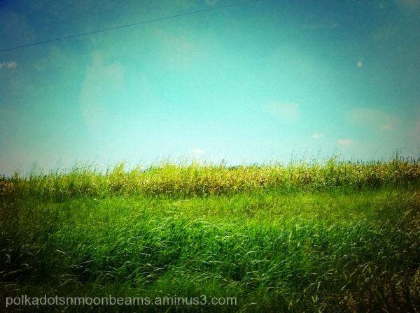 field nature sky grass