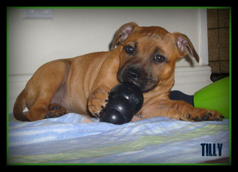 My little puppy Tilly