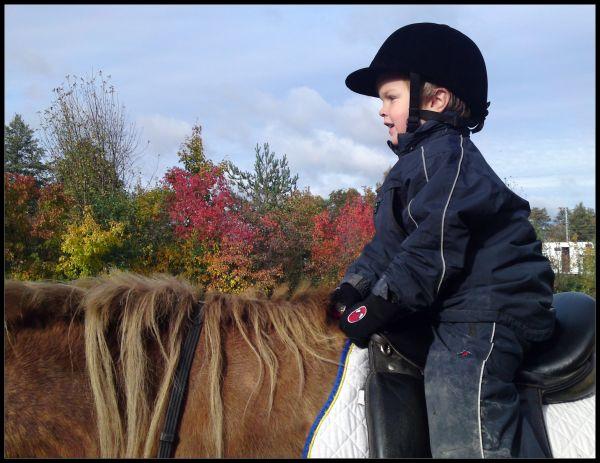 Horse, boy, joy