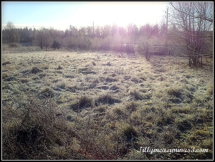 frost, field,branches