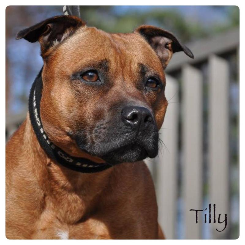 fron pictures of our dog Tilly