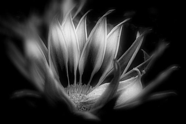 B/W flower image.