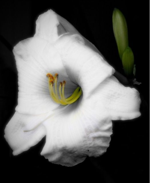 black and white flower with a bit of colours