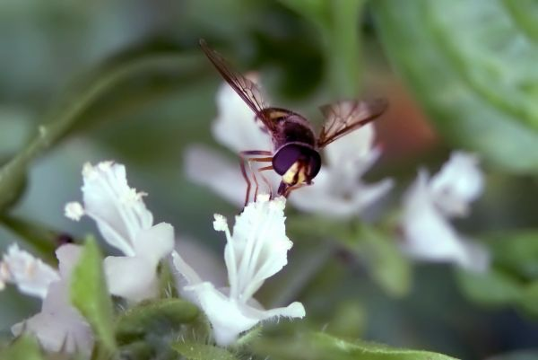 a wasp dirnking on a pistil of a white flower.