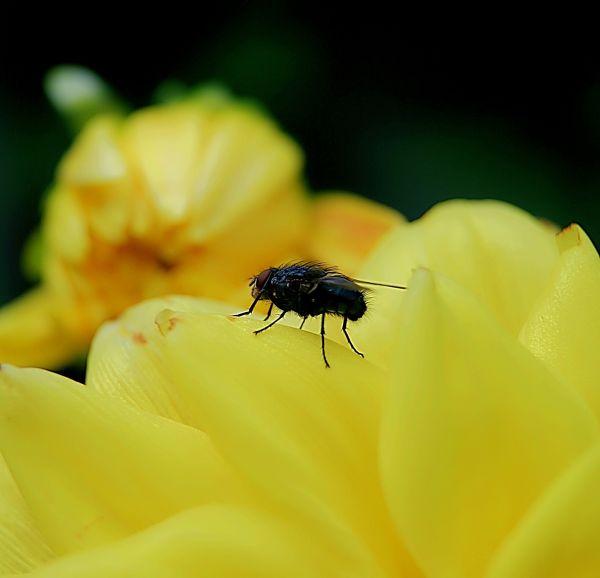 Macro pics of a fly.