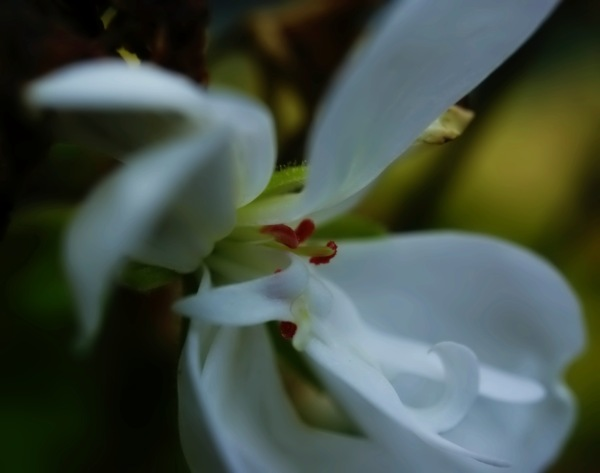 close-up of a white flower