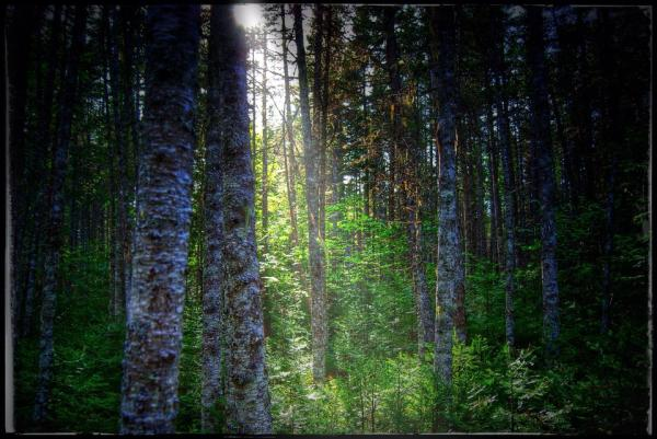 a ray of light in the forest