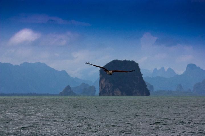 Eagle, Hunting, Thiland, Phuket