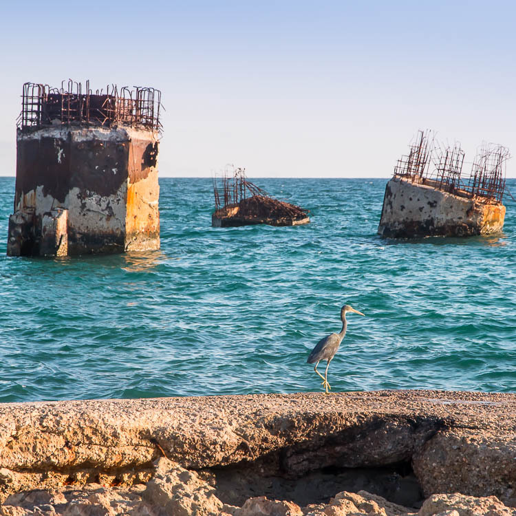 Bird, Heron, Waterfront, Kish island