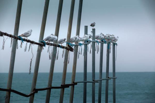 Sea Birds resting