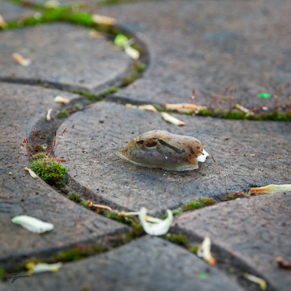 Snail, Bricks, grass, behshahr, chalandar