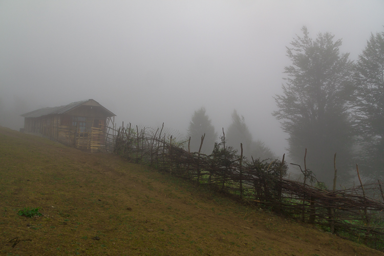 Masal, Olasebelangah,  forest, Arasbaran, Oak