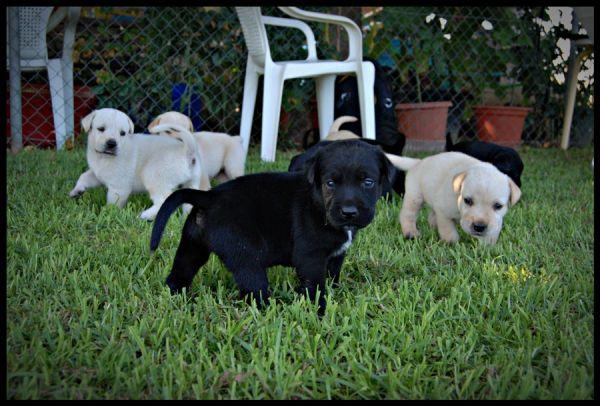 BACKSTREET DOGS
