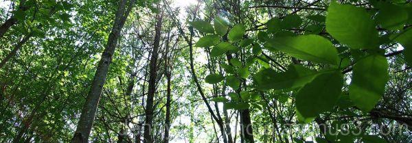 Vermont Wood