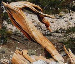 Galen's Wood