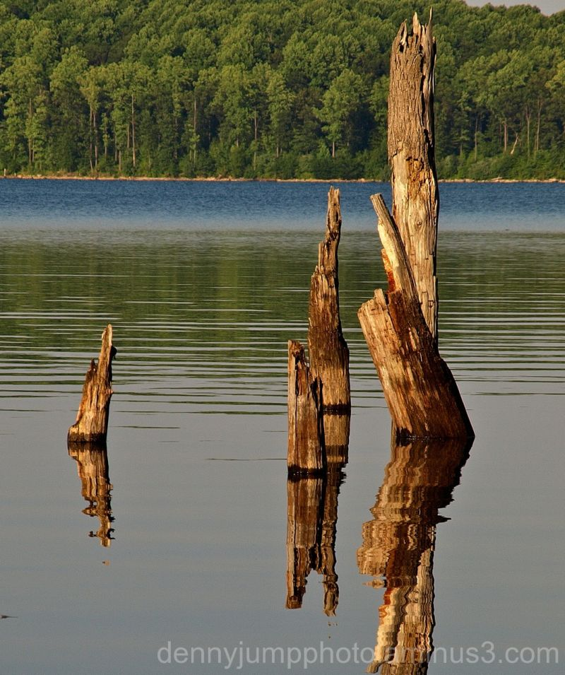 Trees in Water - Merrill Creek Reservoir, NJ