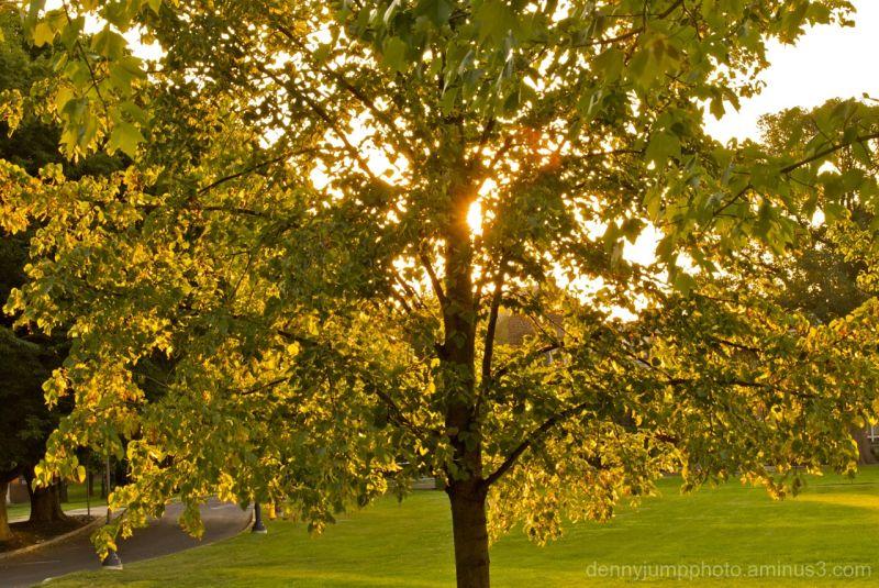 Sunny Treeg