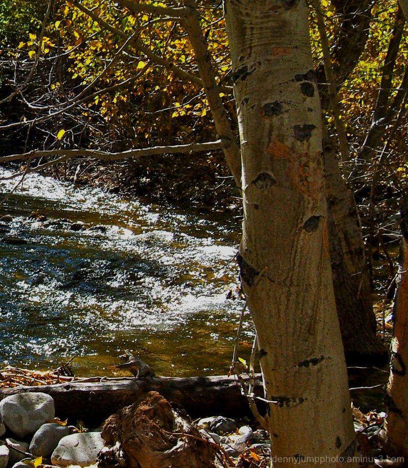 Convict Creek and Aspen