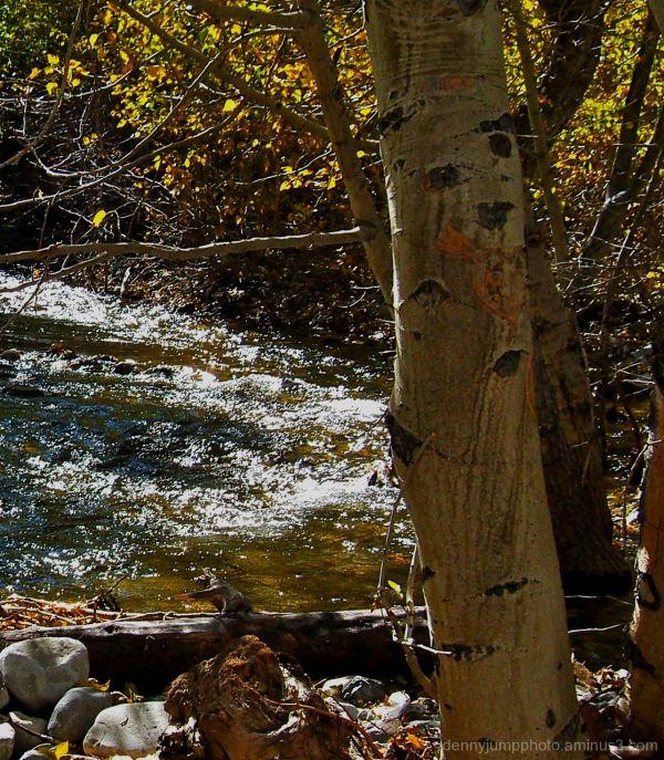 Convict Creek and Aspens
