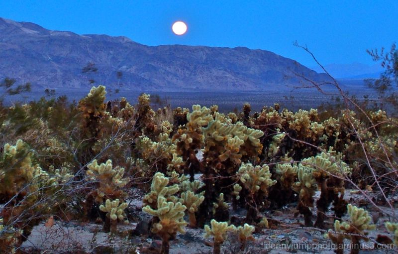 Full Moon and Cholla