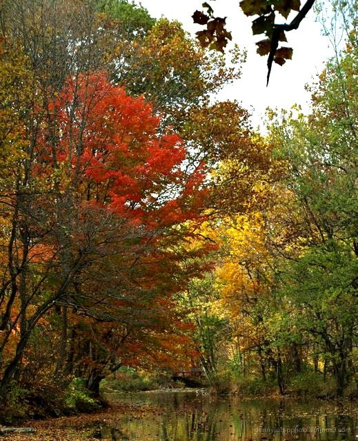 Fall COlor at The Bushkill Creek # 2