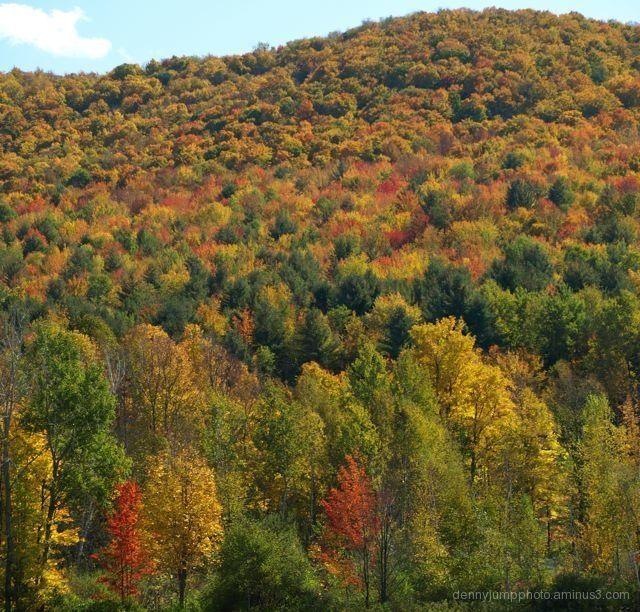Smattering Colors on Vermont Hillside
