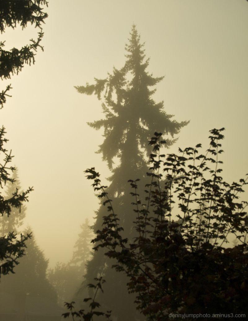 A Foggy Sunrise in Redmond WA