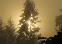 Foggy Sunny all at once