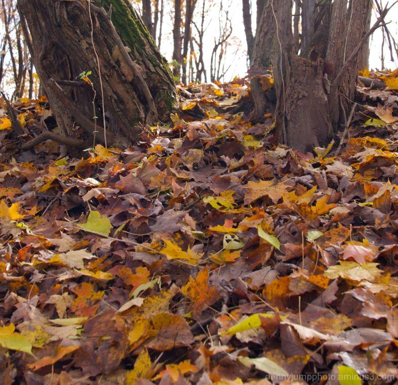 Autumn says goodbye