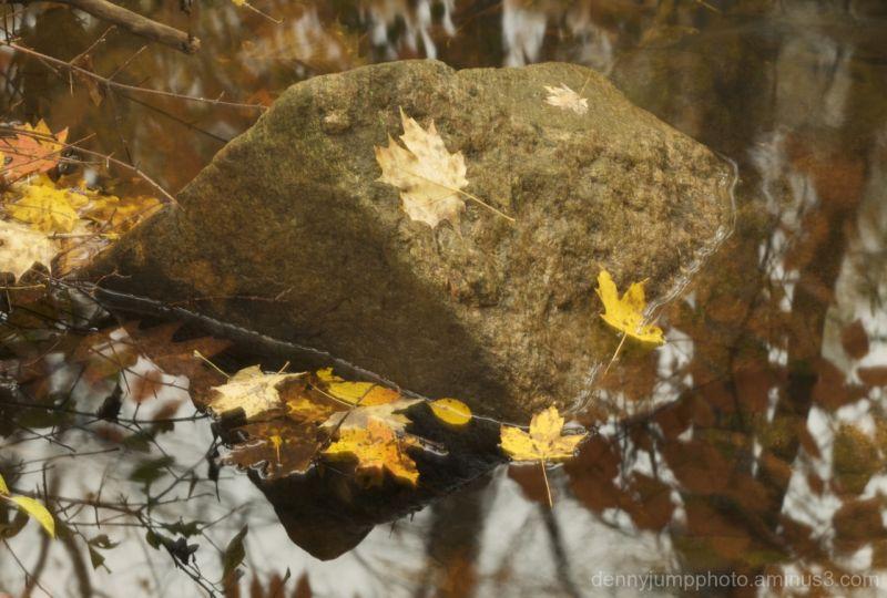 Rock Leaves Water