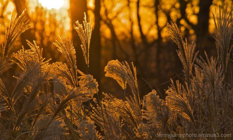 Late Autumn Shines