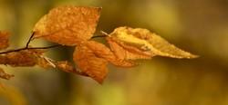 Autumn reminiscences